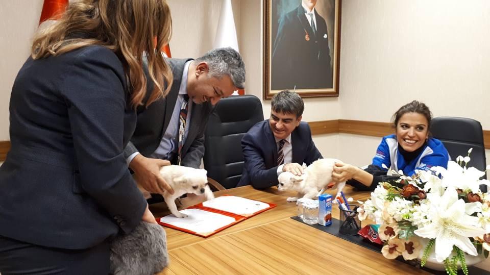 Haytap ve Ticaret Bakanlığı arasında gümrükte kaçak olarak yakalanan hayvanların ihalesiz olarak Haytapa teslimi