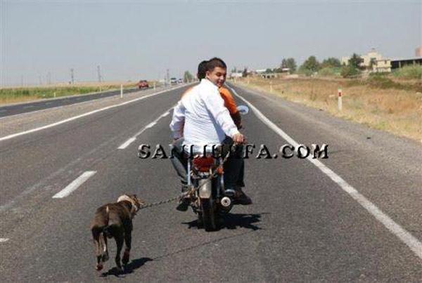 Motosiklet Arkasında Sürüklenen Köpeğe Eziyet İçin Soruşturma Talebi