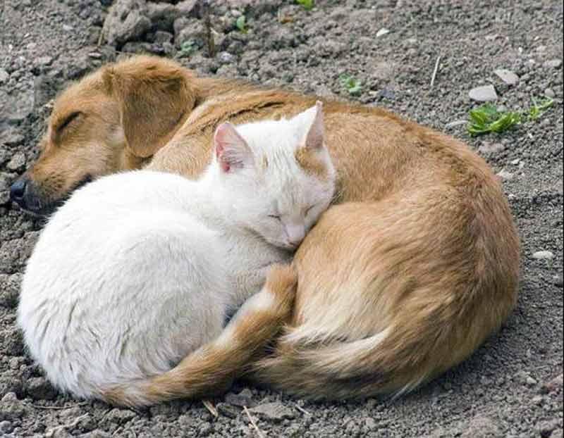 Kediler ve Köpekler evlerinden atılıyor- VATAN GAZETESİ