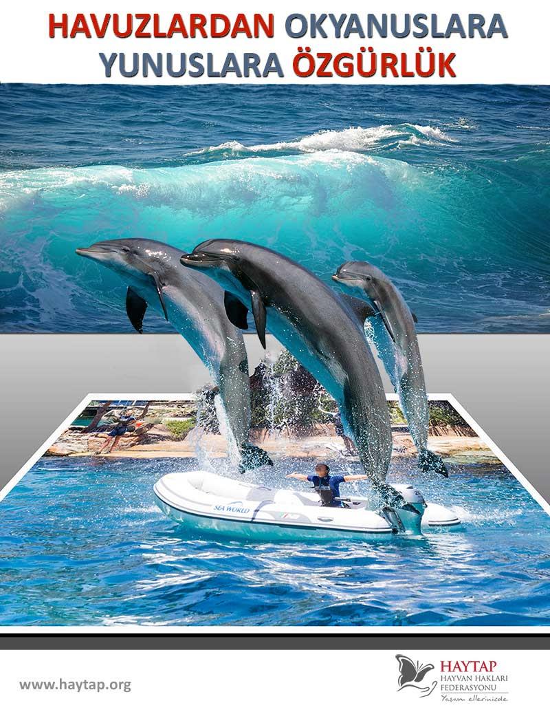 Havuzlardan Okyanuslara Yunuslara Özgürlük