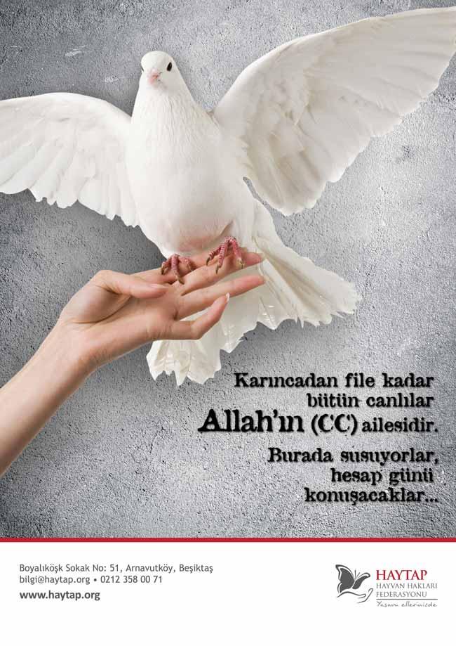 dini_el_kuslu